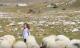 BiH: Sedmogodišnja Šejla jedina je djevojčica na planini Cincar /VIDEO/