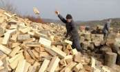 Tona peleta i do 380 KM, metar drva košta 90, a tona uglja 115