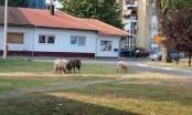 Bojan Krstanović: Brčko je grad u kojem se najviše radi na multietničnosti, ali grad u kojem su podjele najizraženije!