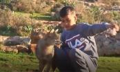 Dječak Hamza pripitomio vuka s kojim sada čuva ovce /VIDEO/