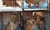 Dvadeset pasa iz brčanskog Azila za pse pronašli dom u Austriji