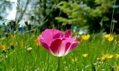 Narednih dana proljeće u svoj svojoj ljepoti, temperature preko 20 stepeni