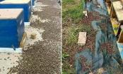 Pesticidi uništavaju pčelinjake: Pčelar uz fotografije mrtvih pčela poslao potresnu poruku