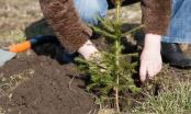 Brčko: Usvojen godišnji plan gazdovanja šumama, učenike osnovnih i srednjih škola uključiti u sistem pošumljavanja