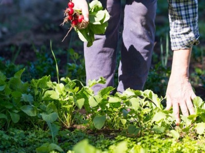 Brčko: Smjernice o načinu i uslovima za podsticaj u poljoprivredi