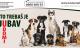 Brčko: Na prvi dan ljeta počinje kampanja na senzibilizaciji građana za udomljavanje pasa