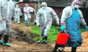U Distriktu nema svinja zaraženih afričkom kugom, veterinska stanica preduzela sve potrebne mjere zaštite