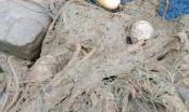 Brčko: Ribolovci svake godine trpe veliku štetu zbog... (FOTO)