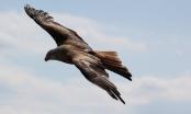 """Stepski orlovi letjeli do Irana i Rusima """"nabili"""" račun za roaming"""