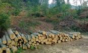 Policija Distrikta uhapsila još jednog inspektora, ovaj put šumarski inspektor