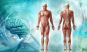 Mnogi ne znaju ove fascinantne činjenice o ljudskom tijelu