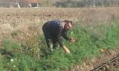 Porodica Hadžić proizvodi povrće ekstra kvaliteta, ali nemaju ga kome prodati