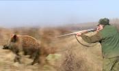 Brčko: Lovci 19. i 26. januara u lovu na divlje svinje jer prave štetu