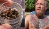Jelovnik MMA borca: Conor McGregor jede mrtve pčele (VIDEO)