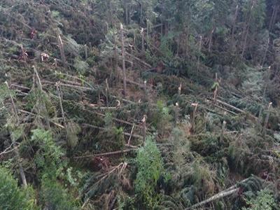 Prizor iz BiH: Snažan vjetar poharao skoro cijelu šumu, šteta je ogromna (FOTO)