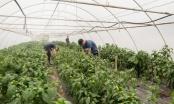 Brčko: Izmjenjen Pravilnik o podsticaju u poljoprivredi, zahtjevi se mogu slati do 25.decembra