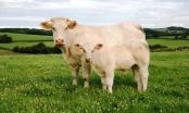 Koliko mljeveno meso može stajati u frižideru, a koliko u zamrzivaču?