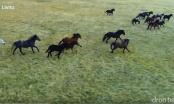 Bosna: Galop divljih konja, čarobna Šujica i izvor Duman (VIDEO)