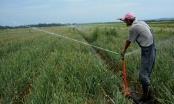 Brčko: Od sutra počinju anketiranja o biljnoj i stočnoj poljoprivrednoj proizvodnji