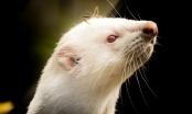 U Sloveniji prvi put potvrđena zaraza životinje virusom korona